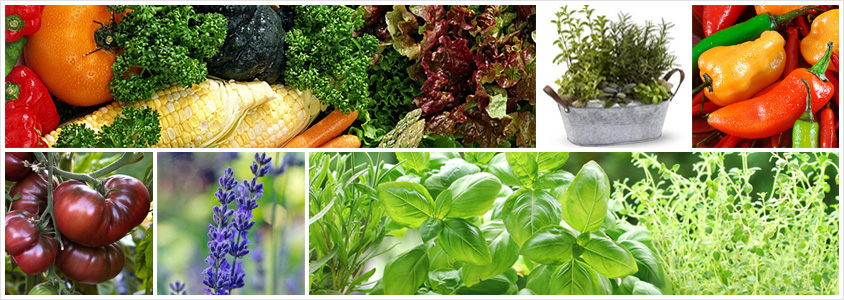 vegetables-and-herbs