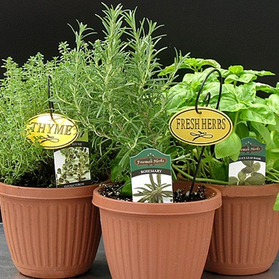 Herbs Assorted3