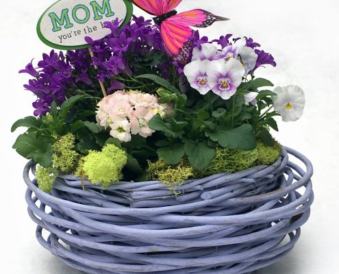 Mothers Day Gift Plant1