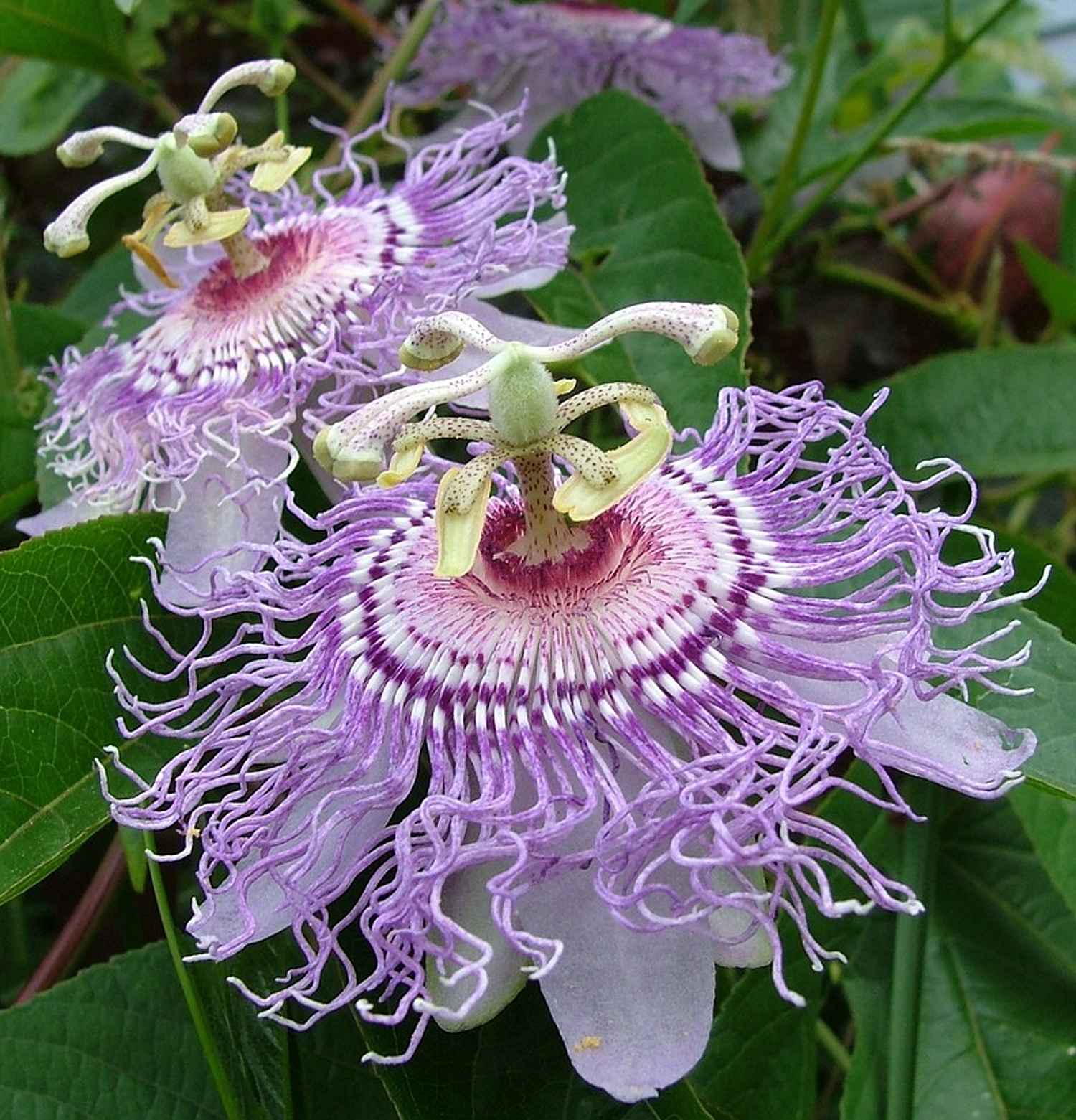Tropical Plants For A Backyard Paradise Canadale Garden Centre