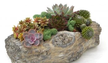 Succulent Log Planter2